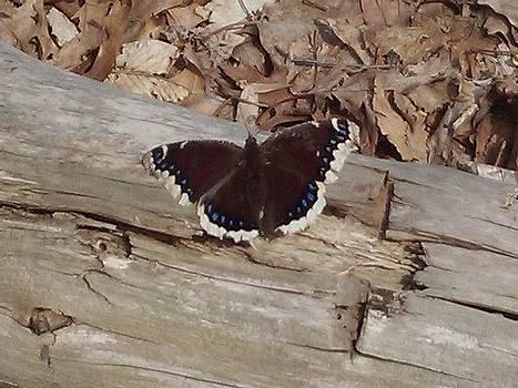 Butterfly by Felix Zapata