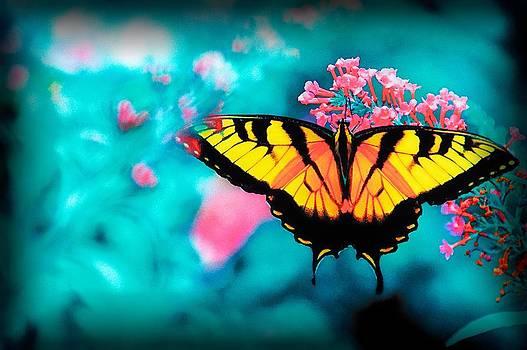 Butterfly by Fernando Cruz