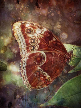 Barbara Orenya - Butterfly in my garden