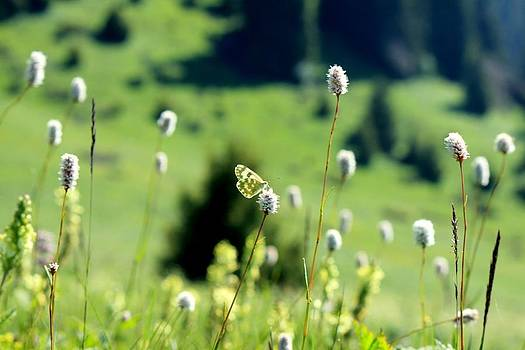 Butterfly in the meadow by Daliya Photography