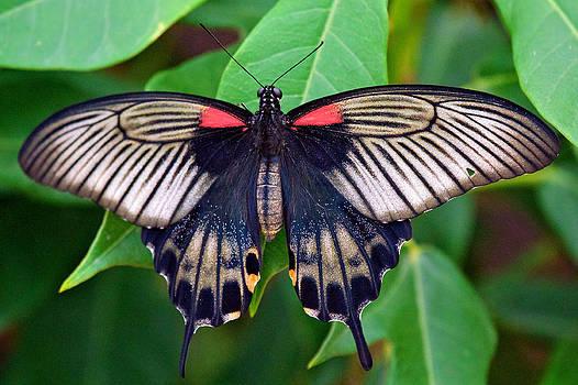 Butterfly by Joe Urbz