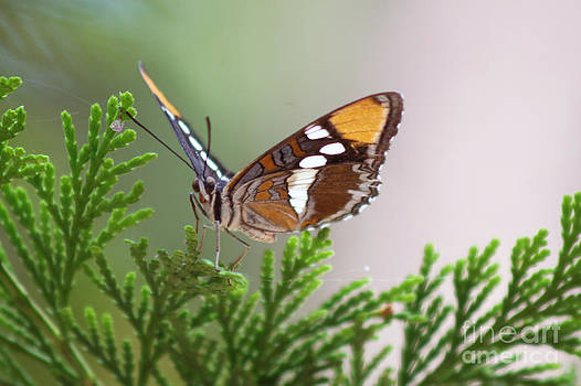 Butterfly by Jose Valeriano