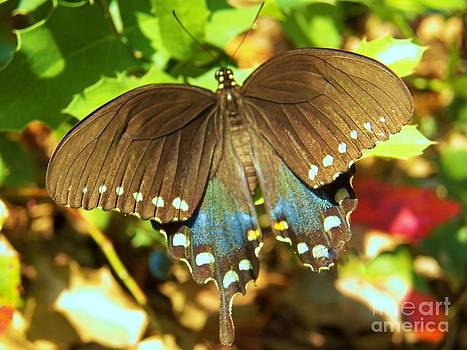 Judy Via-Wolff - Butterfly