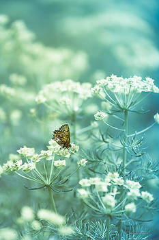 Butterfly Kisses by Dustin Abbott