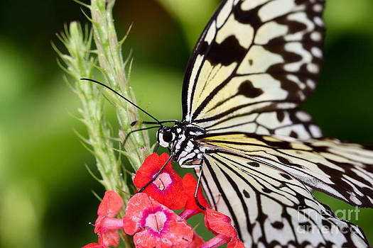 Butterfly Kisses by Pamela Gail Torres