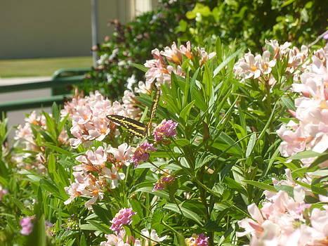 Butterfly Landing by Montana Wilson