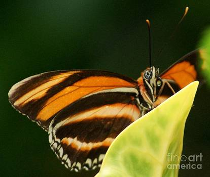 Gail Matthews - Butterfly looking at you