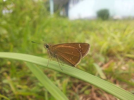 Butterfly On Grass by Smrita Pradhan