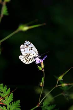 Butterfly on the flower by Daliya Photography