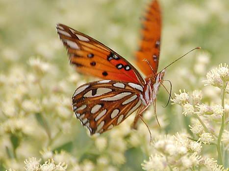 Butterfly  by Rebecca West