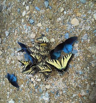 Butterfly Reunion by Jeff Moose