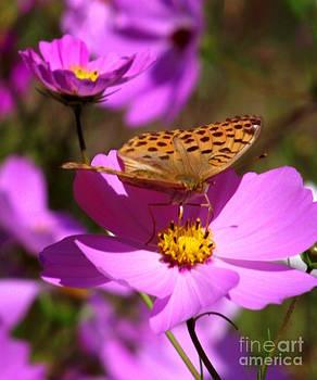 Shawna Gibson - Butterfly