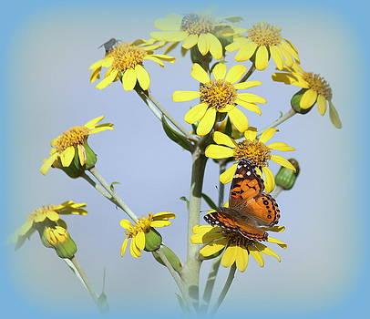 Rosanne Jordan - Butterfly Smiles