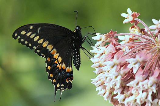 Rosanne Jordan - Butterfly Stop