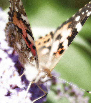 Butterfly Up Close by Fabian Cardon