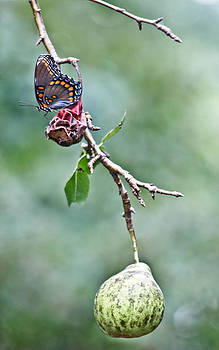 Butterfly with Fruit by Nichole Carpenter