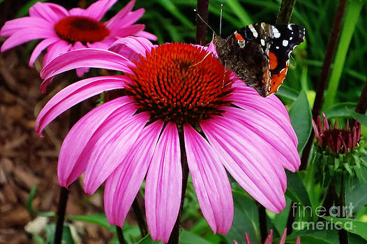 Butterly on Flower by Claudette Bujold-Poirier