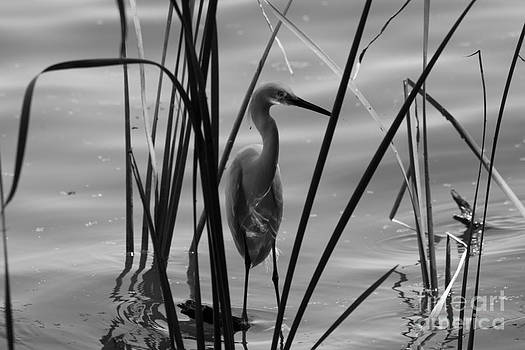 BW Reflections by Kristy Ollis