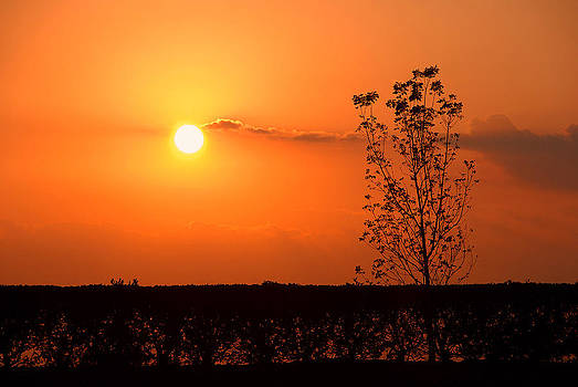By The Everglades by Lorenzo Cassina