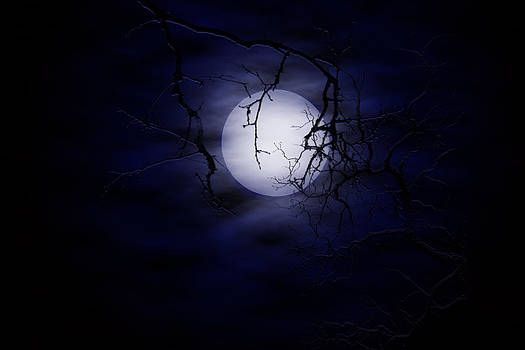 Regina  Williams  - By The Light of the Moon