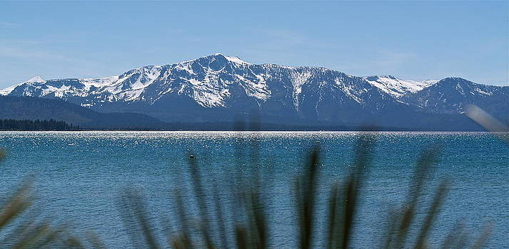 By the Shores of Lake Tahoe by Michele Myers