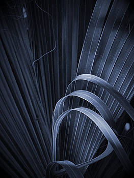Cabbage Palm No. 3 by Phil Penne