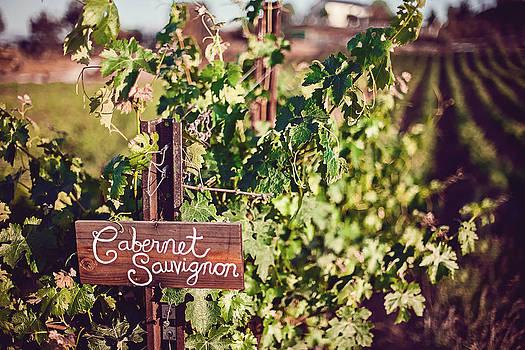 Cabernet Vineyards by April Reppucci