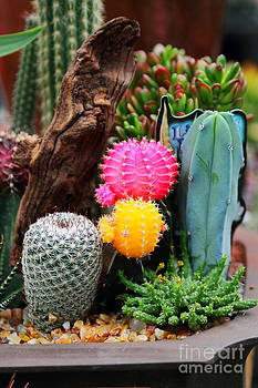 Cacti by Fir Mamat