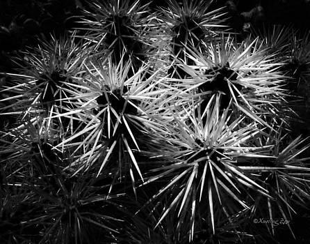 Xueling Zou - Cacti