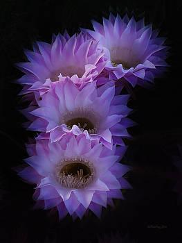 Xueling Zou - Cactus Blossom 5