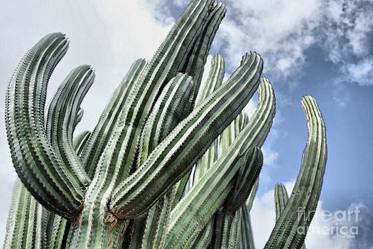 Cheryl Young - Cactus