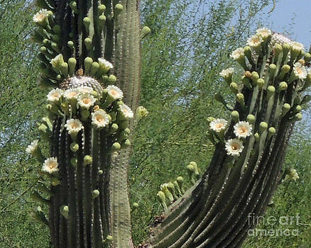 Cactus Flower by ChelsyLotze International Studio