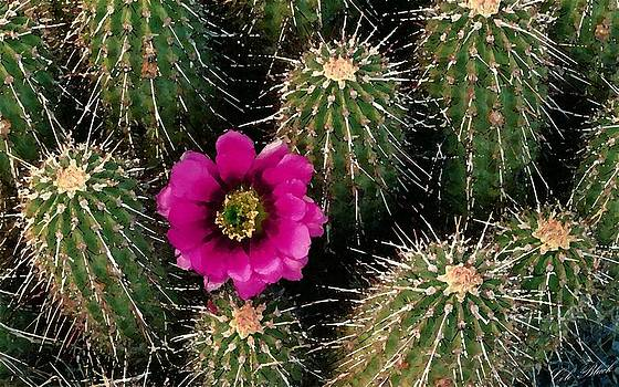 Cactus Flower by Cole Black