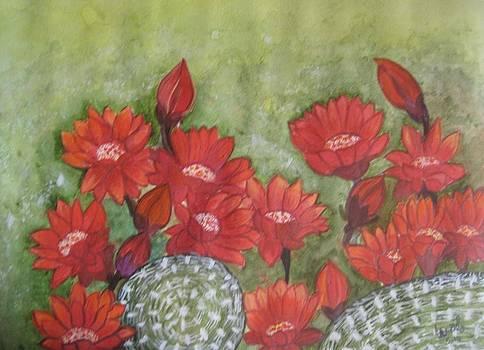Cactus flowers by Usha Rai