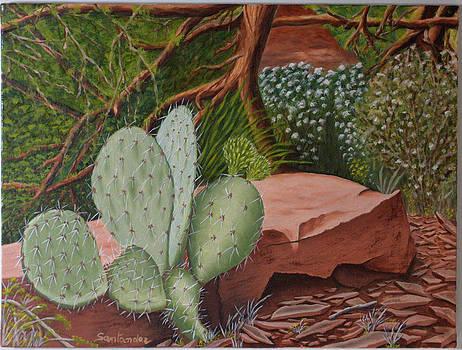 Cactus in Sedona by Paul Santander
