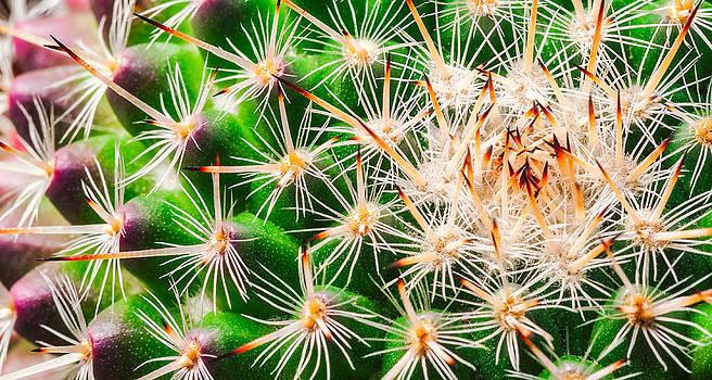 Cactus Top by Janice Sullivan