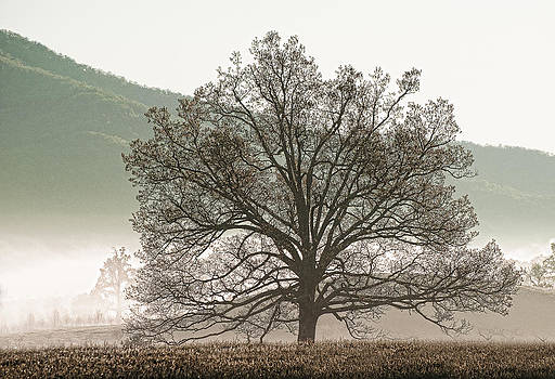 Cades Cove Tree by Phyllis Peterson