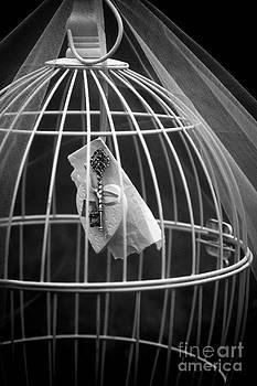 Svetlana Sewell - Cage