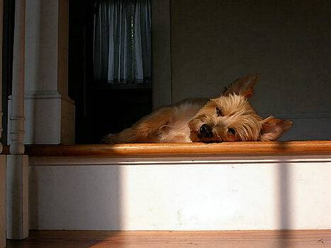 Cairn Terrier In The Sun by Olde Time  Mercantile
