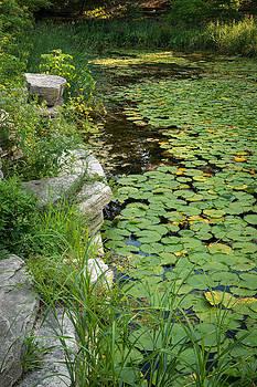 Steve Gadomski - Caldwell Lily Pond Chicago IL Number 2