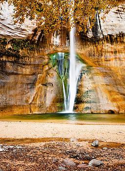 Calf Creek Falls by David  Forster