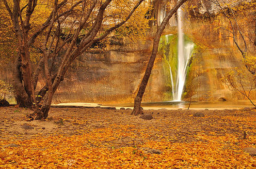 Calf Creek Falls Under the Canopy by Adam Paashaus