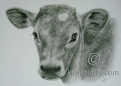 Calf by Kuntal Chaudhuri