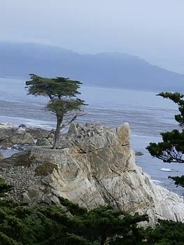 California Bonsai by Tonie Cook