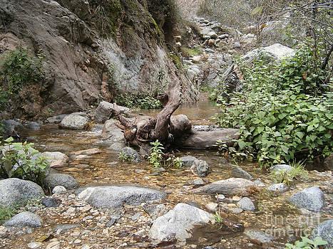 California Canyon 14 by Drew Shourd