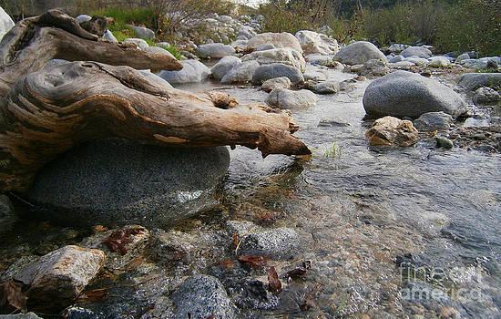 California Canyon 20 by Drew Shourd