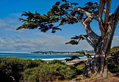 California Coast Carmel by Heide Stover