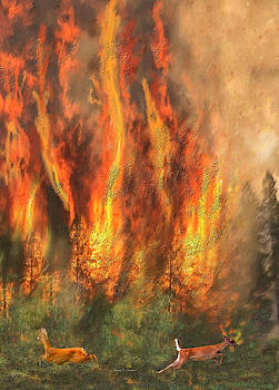 Angela A Stanton - California Forest Fires