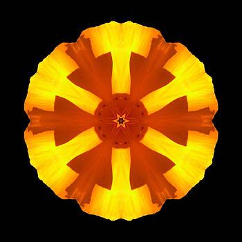 California Poppy Flower Mandala by David J Bookbinder