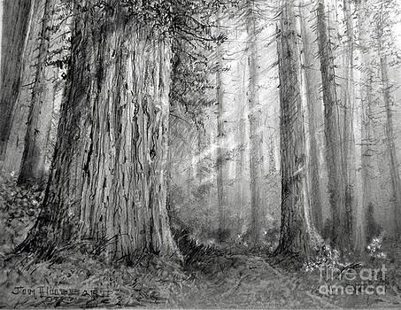 Jim Hubbard - California Redwood